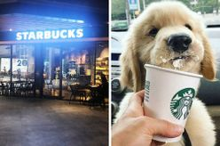 Starbucks Jaya One Serves Puppucinos For Your Doggos Now, A Cool Way To Lepak With Your Furkid
