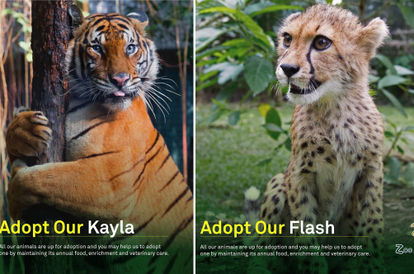 you-can-help-zoo-negara-out-by-adopting-some-of-its-animals-for-just-rm25