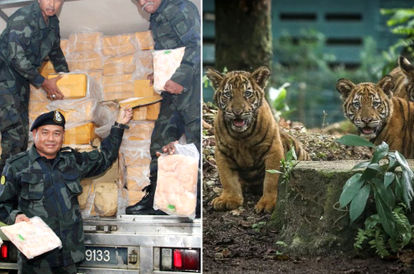 authorities-send-8-tonnes-of-smuggled-frozen-chicken-to-feed-the-animals-at-zoo-negara