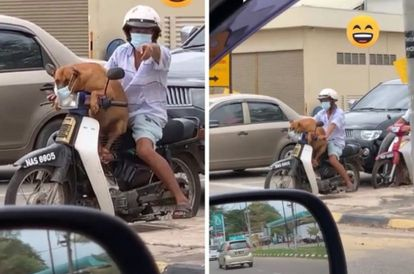 TikTok Video Of Dog Riding On Owner's Motorbike While Wearing Mask Amuses Netizens