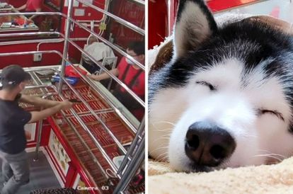 Guard Dog Continues To Sleep While Armed Robber 'Attacks' Jewellery Store