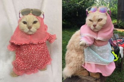Halal Fashion: Tutup Your Cat's Aurat With These Cat Hijabs