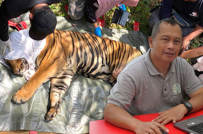 The Story Of Dr David @ Jeabeat Magintan, The Protector Of Rescued Wild Animals In Malaysia