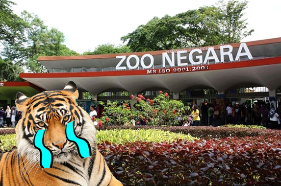 zoo-negara-is-struggling-to-generate-revenue-so-they-need-our-help-again