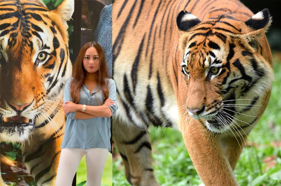 local-actress-maya-karin-launches-campaign-to-help-save-our-malayan-tigers
