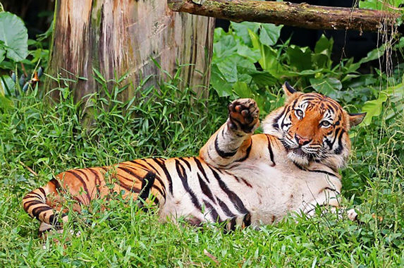 don-t-worry-guys-zoo-negara-has-taken-measures-to-protect-its-animals-from-covid-19