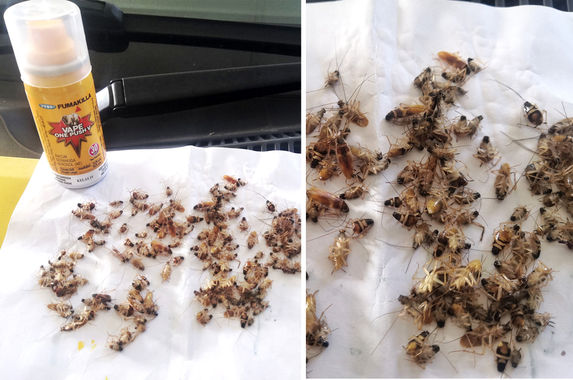 man-shares-simple-yet-effective-way-of-killing-all-the-cockroaches-in-your-car-in-just-one-night