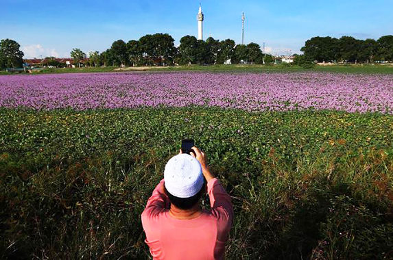 20-malaysians-were-fined-rm1-000-each-for-taking-photographs-of-flowers-in-a-pond