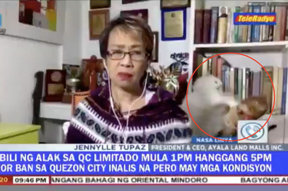 video-filipino-reporter-tries-hard-to-stay-calm-on-live-tv-as-her-cats-fight-furiously-in-the-background