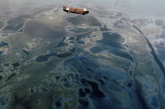 two-ships-collided-and-300-tonnes-of-oil-was-spilled