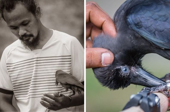 singapore-man-keeps-crow-as-pet-trains-it-to-hunt-for-coins-and-other-tricks