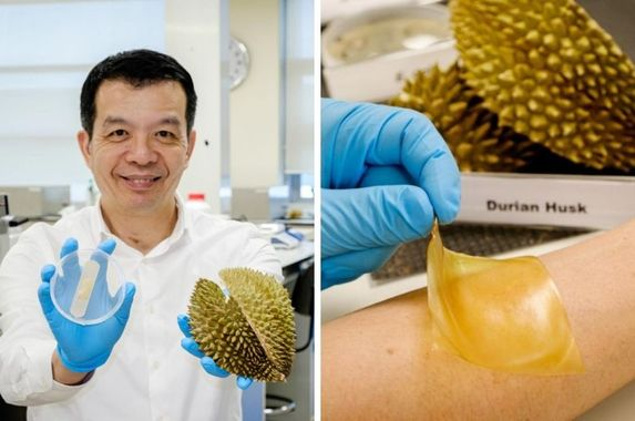ntu-singapore-researchers-develop-cheaper-biodegradable-gel-bandages-made-from-durian-husks