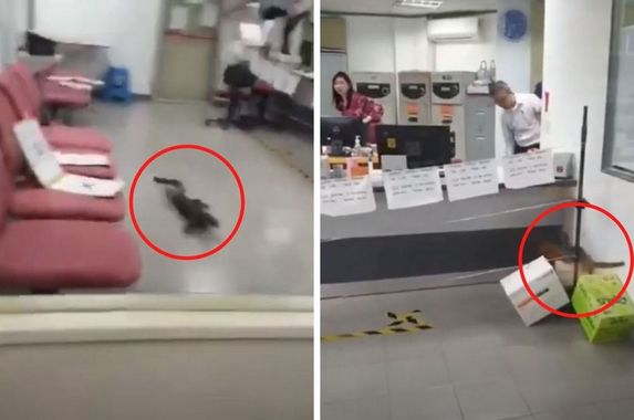 monitor-lizard-give-bank-employees-a-scare-after-climbing-to-office-on-third-floor