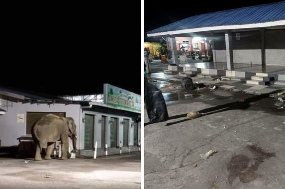 surprise-visit-elephant-enters-shop-near-banjaran-titiwangsa-rest-area-looking-for-food
