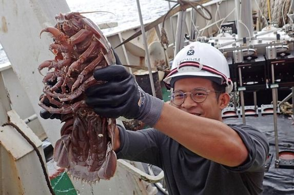 researchers-discover-new-sea-cockroach-species-in-indonesia-and-they-re-terrifyingly-huge