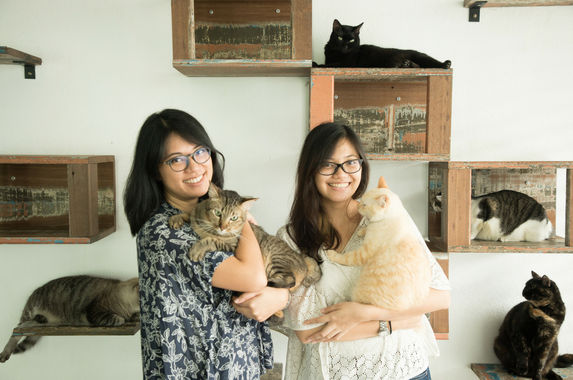 80-cats-and-counting-meet-malaysia-s-ultimate-cat-family