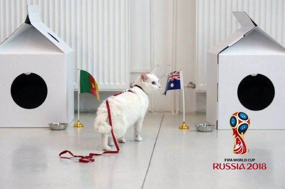 this-cute-psychic-cat-will-be-predicting-the-2018-fifa-world-cup
