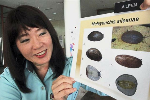 a-new-slug-species-was-named-after-this-awesome-malaysian-marine-biologist