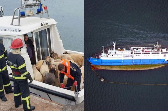 over-14-000-sheep-die-after-the-cargo-ship-they-were-on-capsized