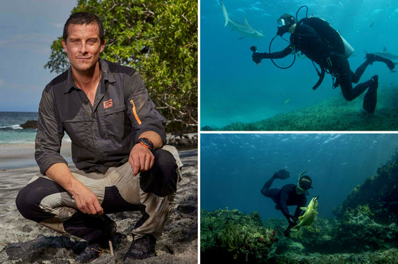 exclusive-what-happens-when-bear-grylls-goes-face-to-face-with-sharks