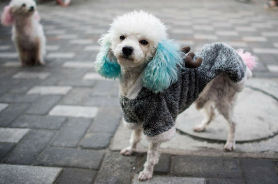 the-streets-of-shanghai-have-turned-into-fashion-runways-for-these-stylish-dogs