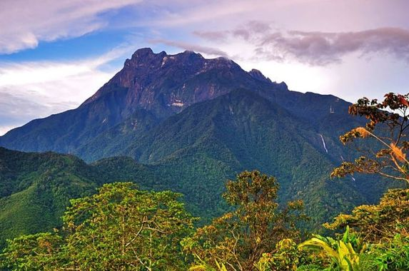 the-flora-and-fauna-you-can-find-on-gunung-kinabalu