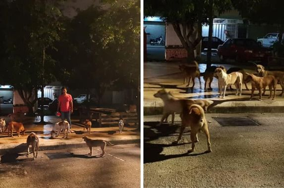 irresponsible-malaysian-pet-owners-are-abandoning-their-pets-during-mco