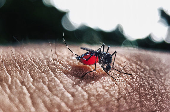 dengue-cases-in-malaysia-reach-an-all-time-high