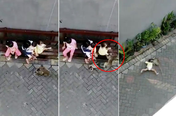a-scooter-riding-monkey-captured-on-video-trying-to-kidnap-toddler-in-indonesia