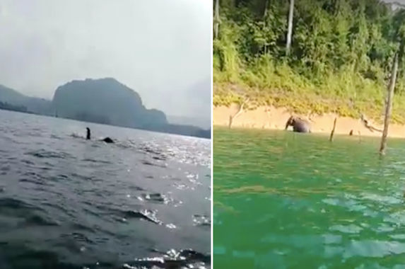 angler-records-rare-video-of-elephant-swimming-in-tasik-kenyir