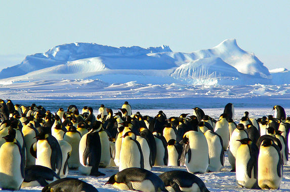 airbnb-wants-to-send-you-to-an-all-expense-paid-trip-to-the-antarctica