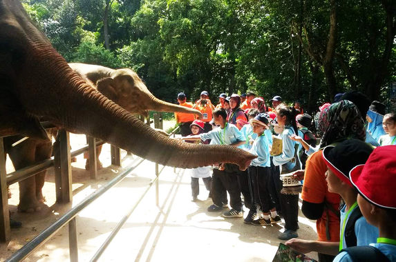 you-can-now-sponsor-your-favourite-animals-at-zoo-melaka