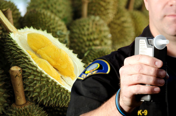 man-fails-breathalyser-test-after-eating-too-much-durian
