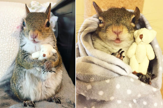meet-jill-the-squirrel-who-can-t-go-to-sleep-without-her-little-teddy-bear