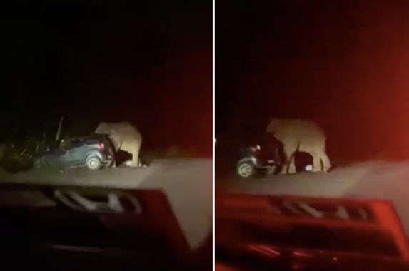 a-group-of-malaysians-narrowly-escapes-when-an-angry-elephant-stomps-on-their-car