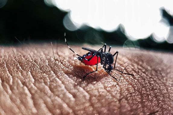 dengue-cases-see-an-increase-of-89-5-per-cent-this-year