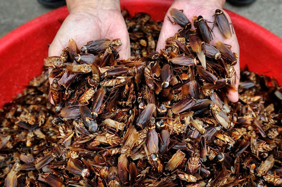 doctors-find-a-family-of-cockroaches-living-in-man-s-ear