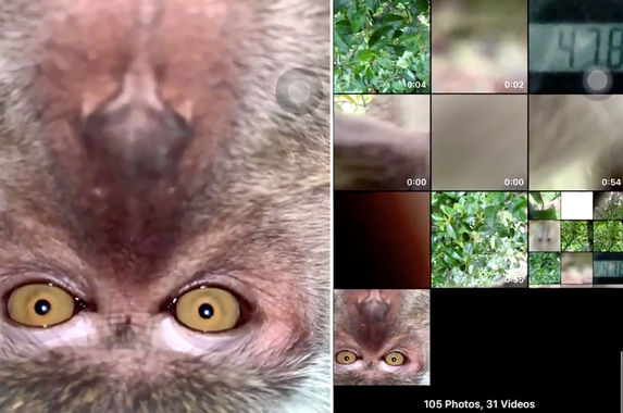 photos-malaysian-man-finds-stolen-phone-and-discovers-selfies-of-monkey