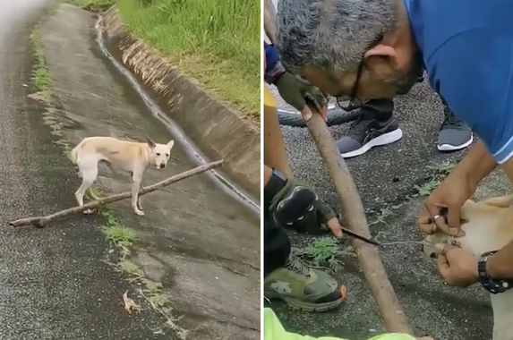 kind-hearted-malaysians-come-together-to-rescue-injured-dog-stuck-on-karak-highway
