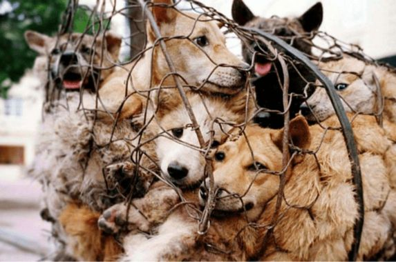 china-announces-new-guidelines-that-declare-dogs-as-pets-and-not-livestock