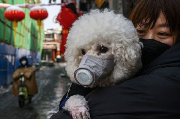 don-t-kiss-your-pooch-a-pet-dog-has-been-tested-positive-for-covid-19-in-hong-kong