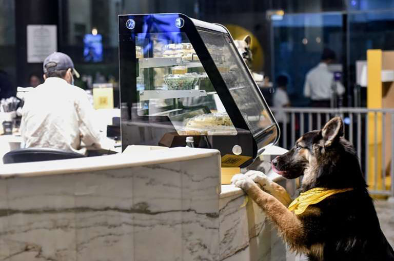 first-dog-friendly-caf-opens-in-saudi-arabia