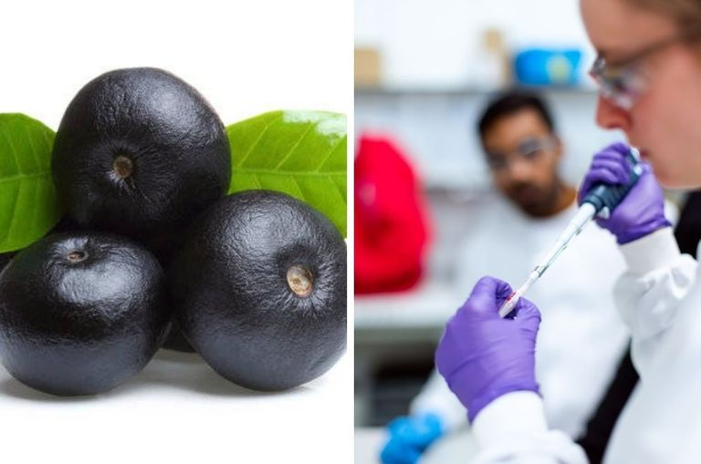 could-acai-berries-help-fight-covid-19-canadian-researchers-are-trying-to-prove-it-can