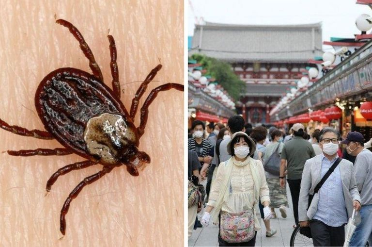 infectious-tick-borne-virus-has-killed-7-and-infected-60-in-china