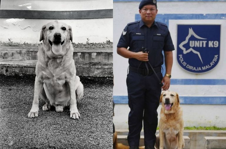 rest-in-love-pdrm-s-k9-unit-good-boy-dies-after-serving-the-country-for-12-years