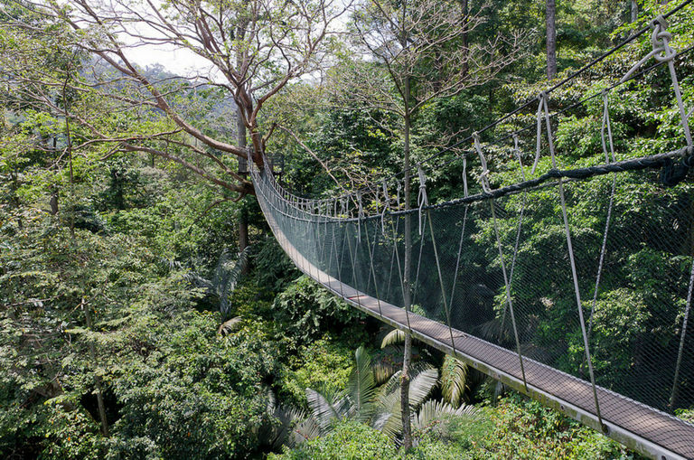 frim-canopy-walk-closes-permanently-effective-30-june